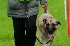 Patricks Hundeschule