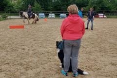 Begegnung Pferd-Hund (JUHU)